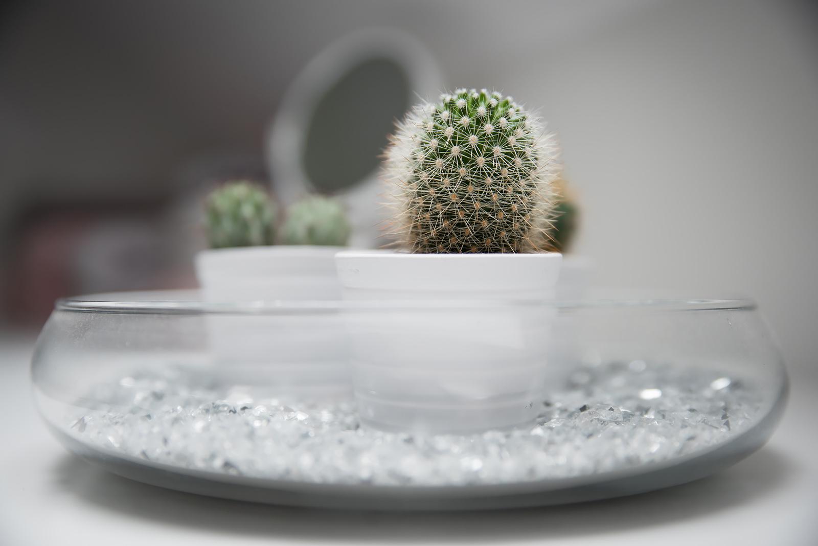 kaktusy-w-lazience