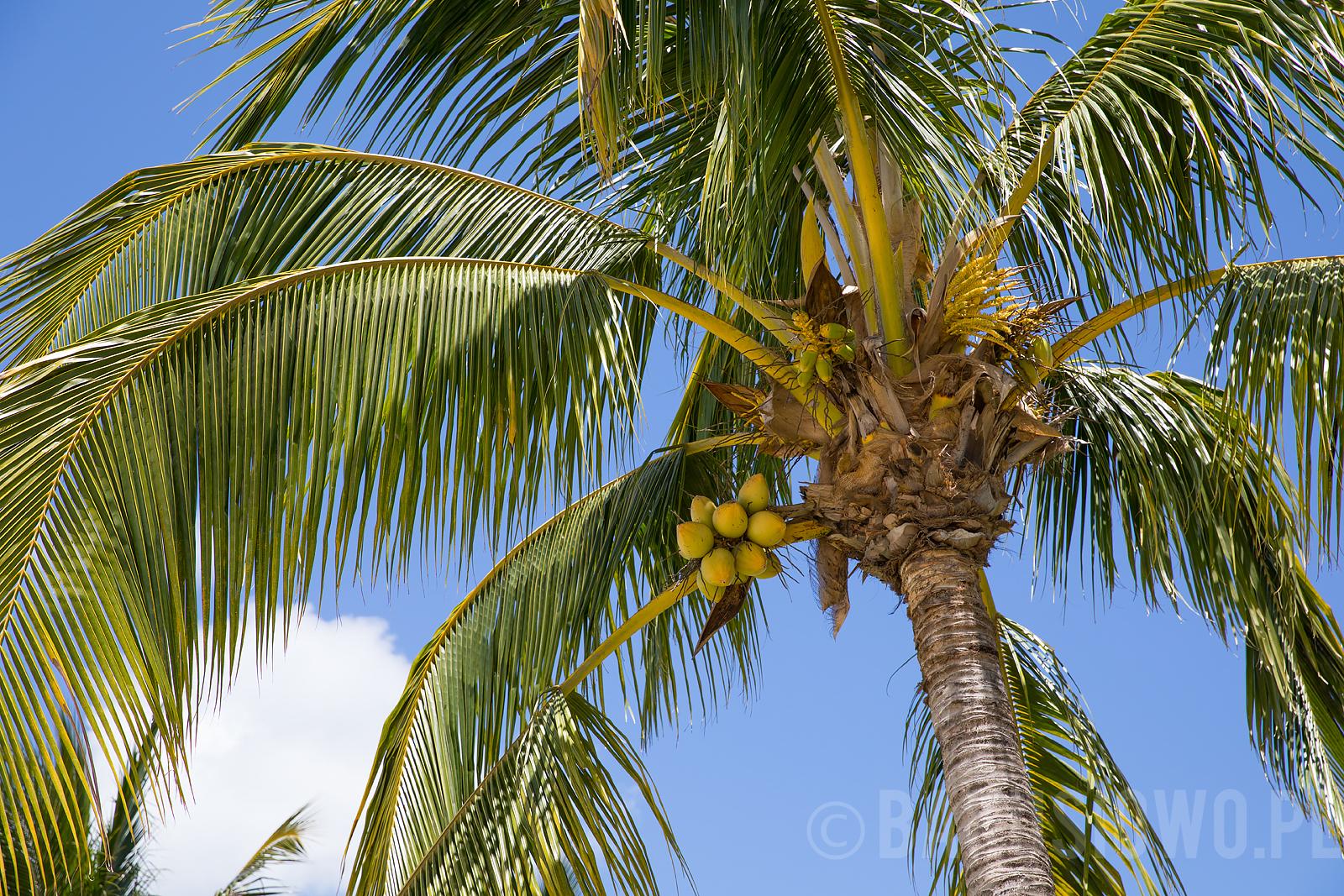 mauritius-le-meridien-photos-28