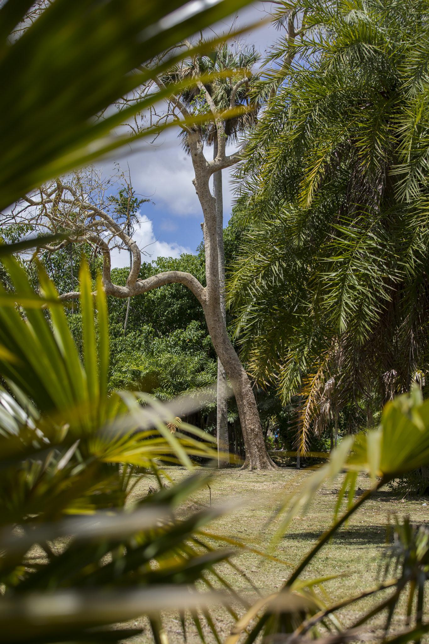 Mauritius Opinie Blog 103