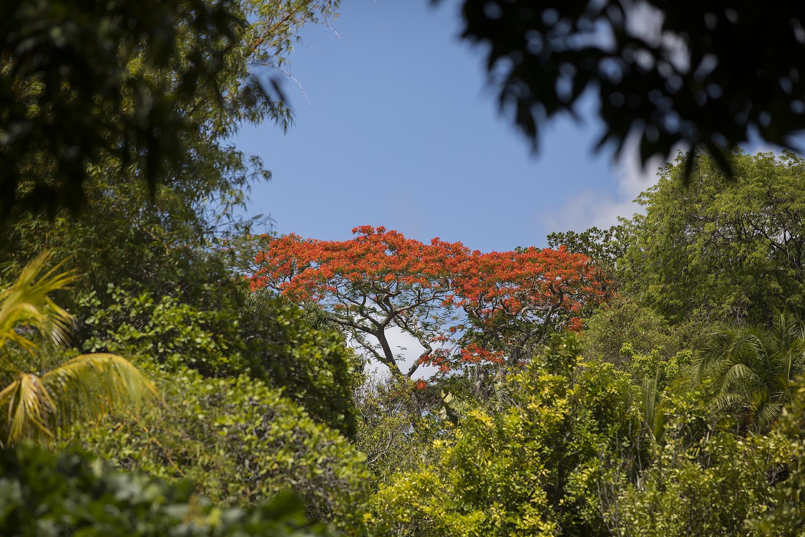 Mauritius Opinie Blog 108