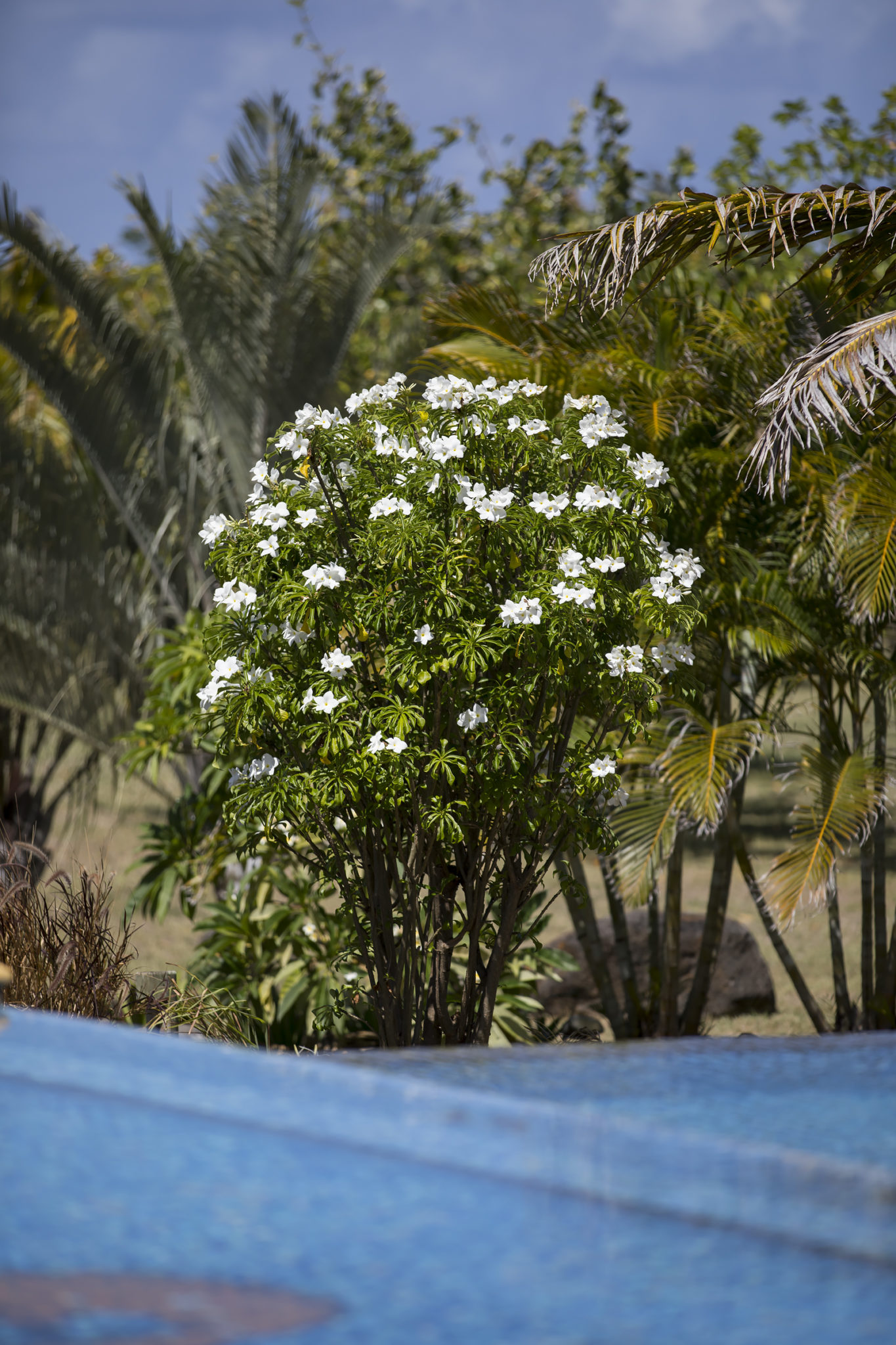 Mauritius Opinie Blog 63