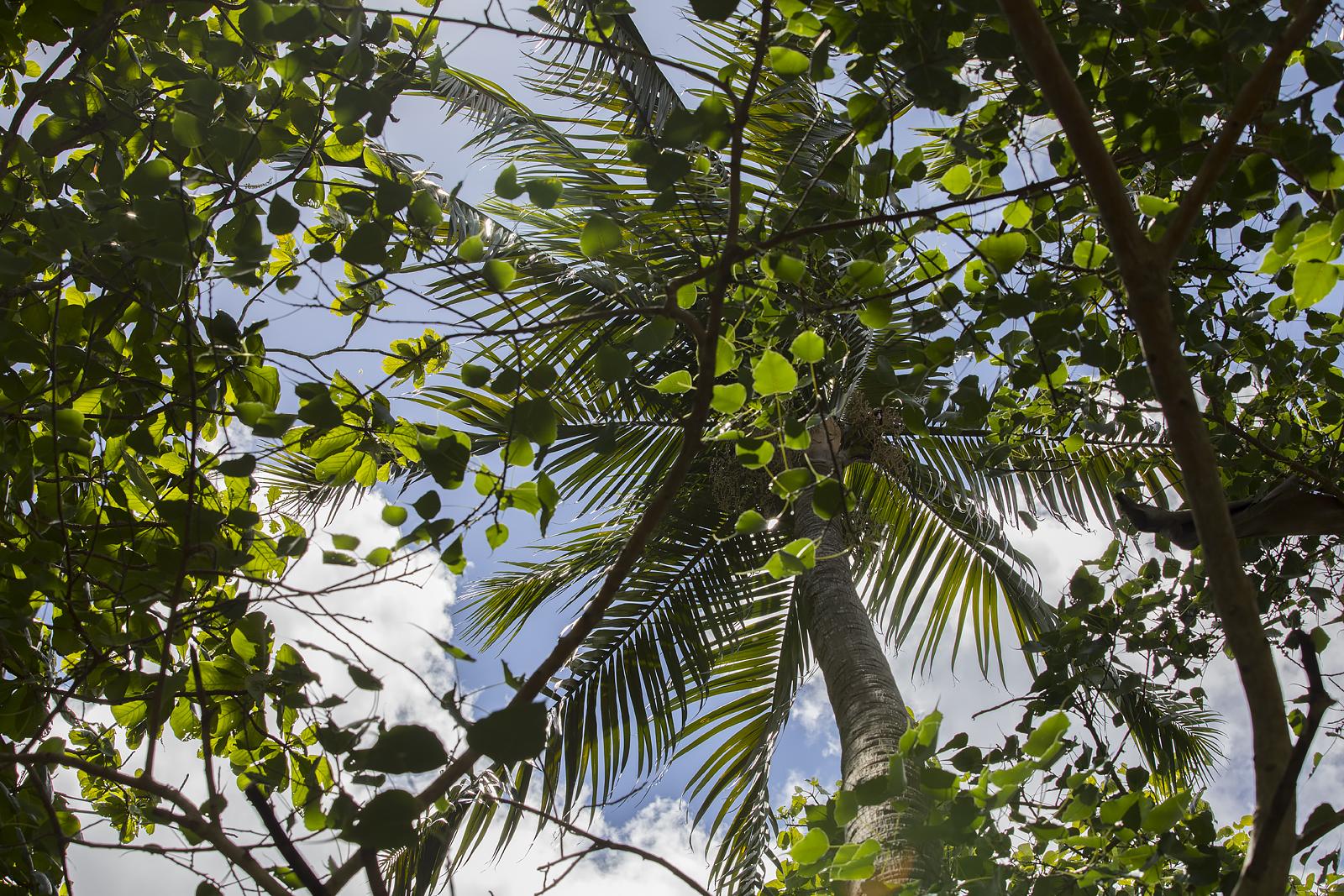Mauritius Opinie Blog 87