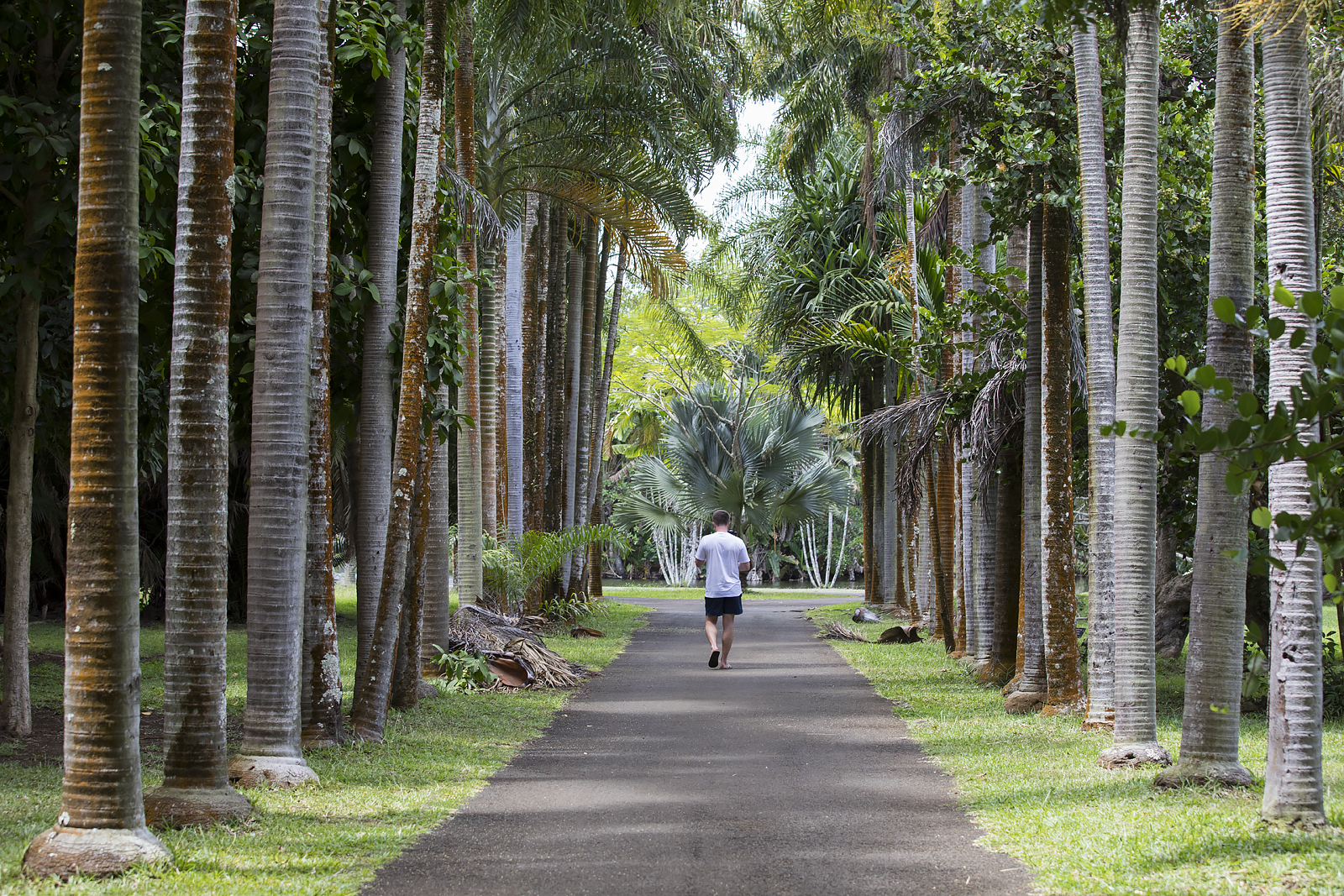 Mauritius Opinie Blog 97